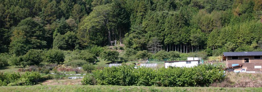 五郎姫神社